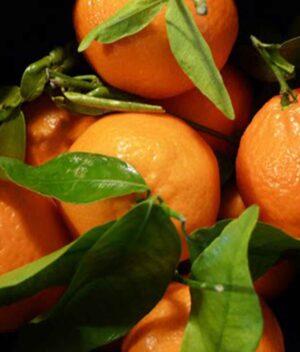 Bergamota Ponkan Orgânica